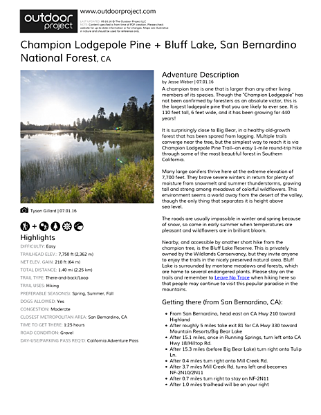 Champion Lodgepole Pine + Bluff Lake Field Guide