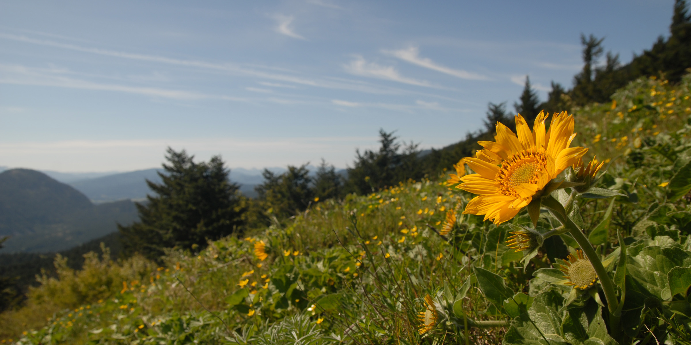 An Abbreviated Flower Finder For Dog Mountain In May Outdoor Project