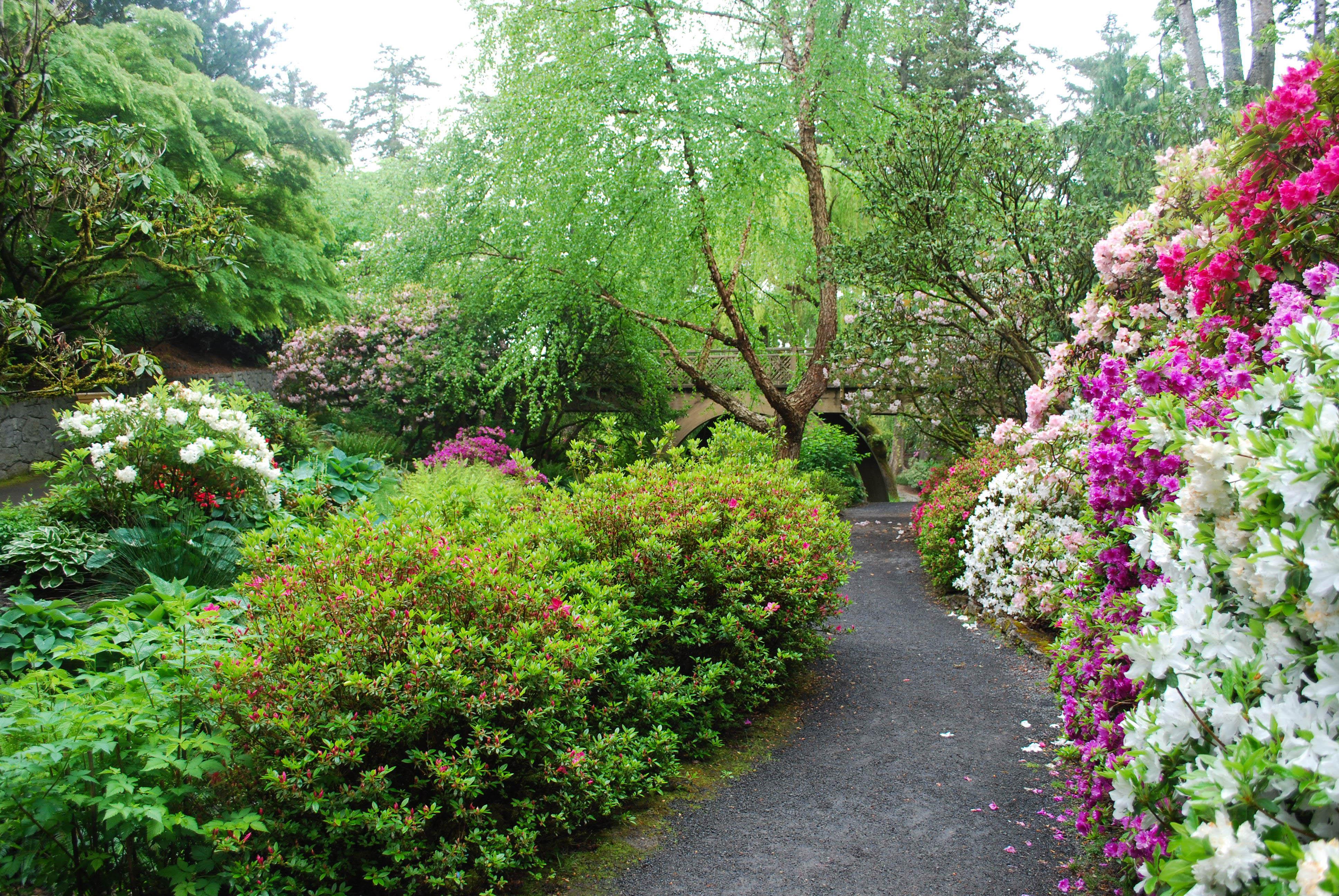 Crystal Springs Rhododendron Garden Oregon