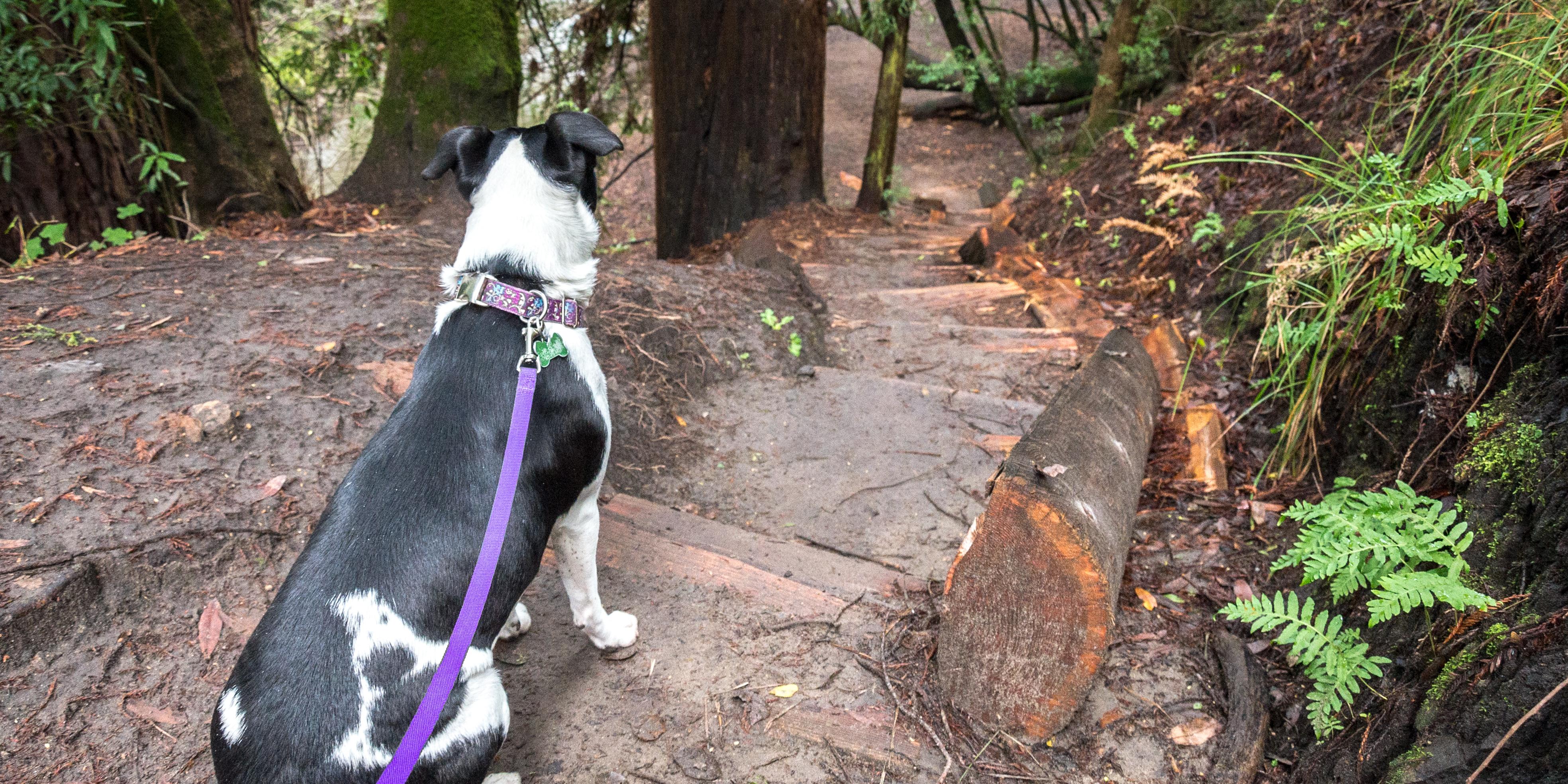 Dog Friendly Hikes Near Sacramento