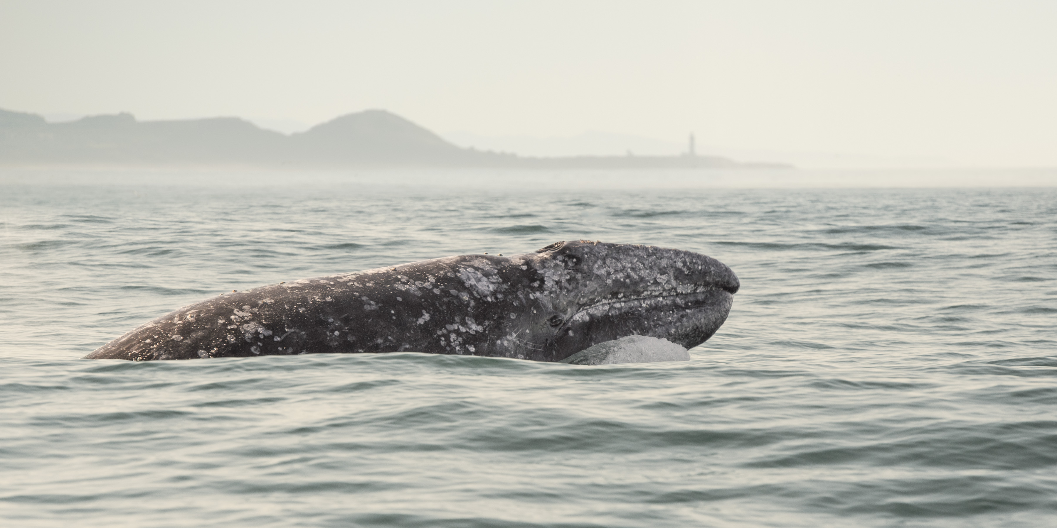 whale watching oregon coast 2020