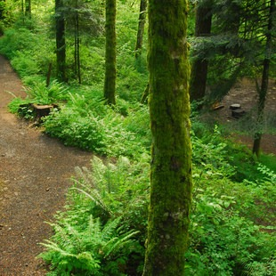 Ainsworth State Park Campground, Columbia River Gorge, Outdoor Project