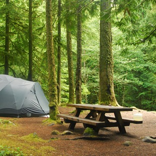 Tollgate Campground, Mt. Hood + Clackamas River Area, Outdoor Project
