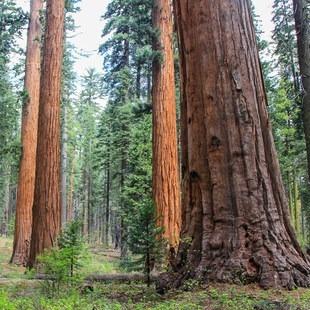 Calaveras Big Trees State Park, California, Outdoor Project