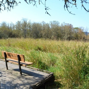 Jackson-Frazier Wetland, Oregon, Outdoor Project