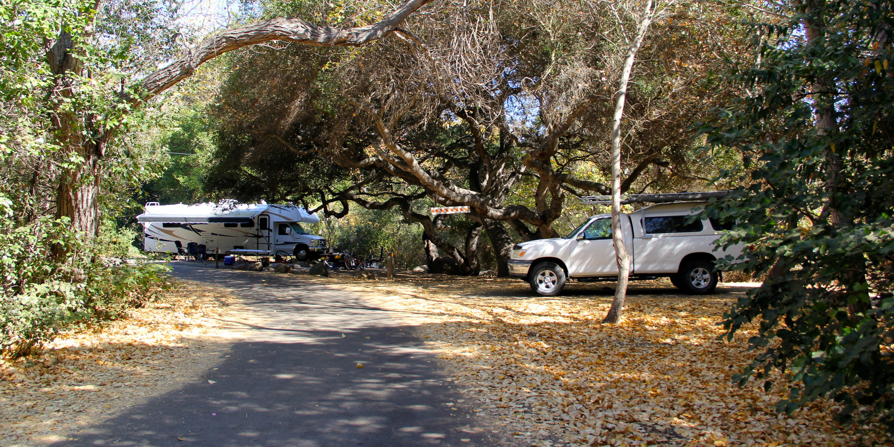 Campsites Are Shaded By Coast Live Oak Quercus Agrifolia And Western Or California Sycamore A Campsite On Loop 1 28 El Capitan State Beach