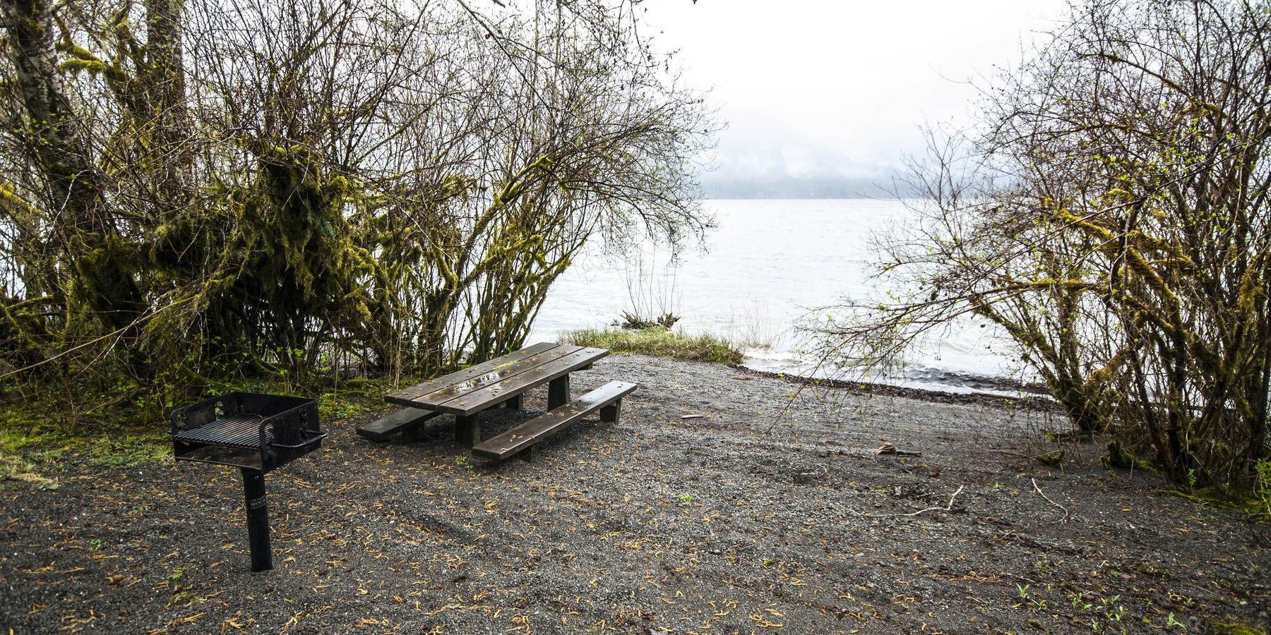 Lake Quinault, Willaby Campground   Outdoor Project