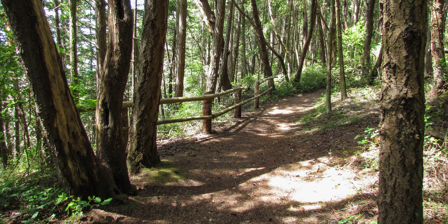Camano Island State Park Loop Trails Outdoor Project