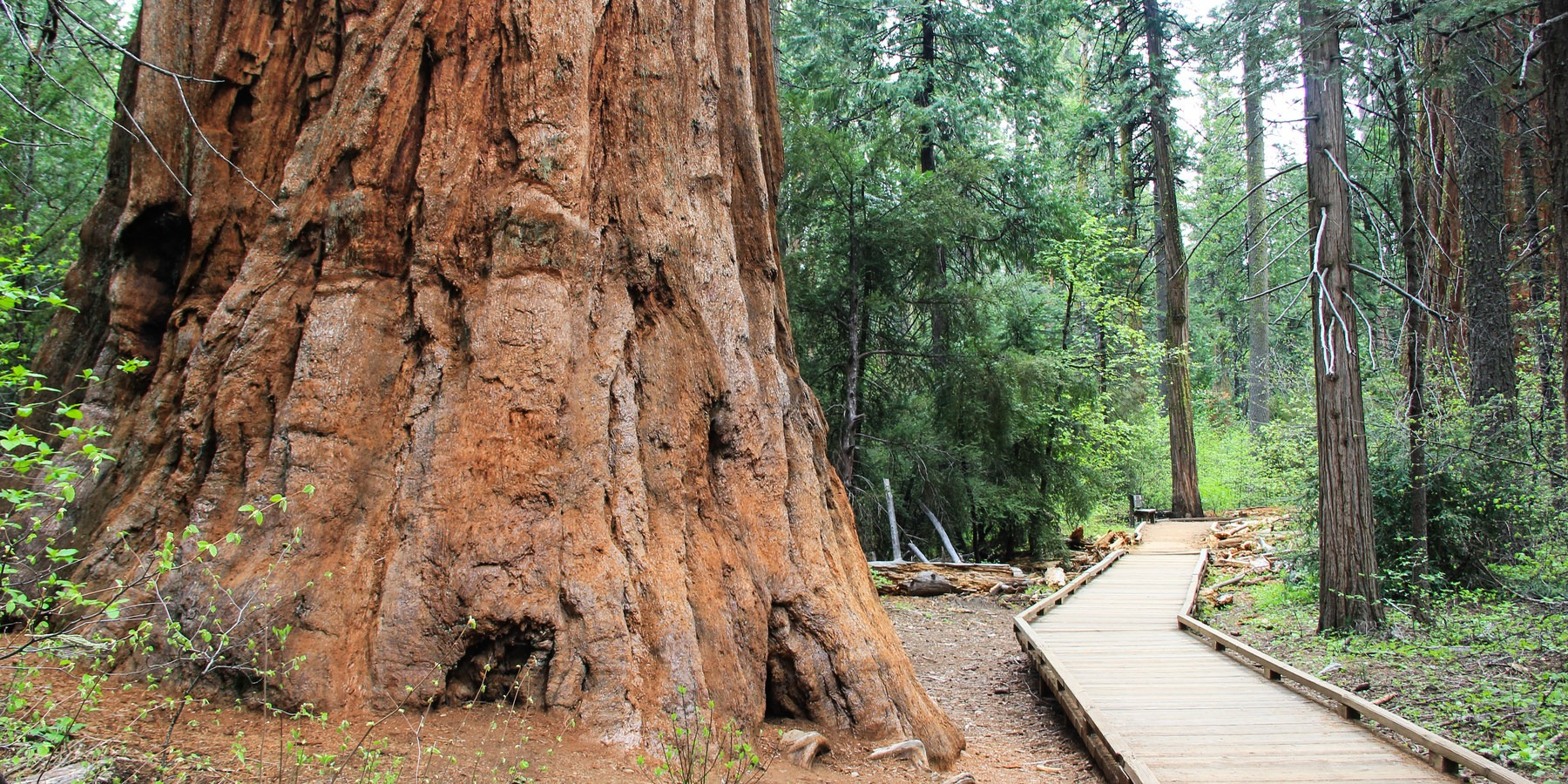 Calaveras Big Trees State Park Outdoor Project