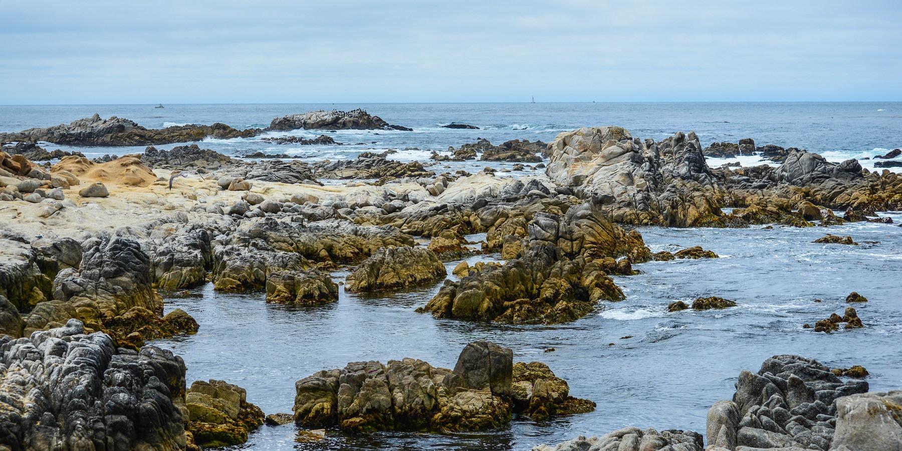 The Rocky Sline Creates An Abundance Of Tidepools At Asilomar State Marine Reserve