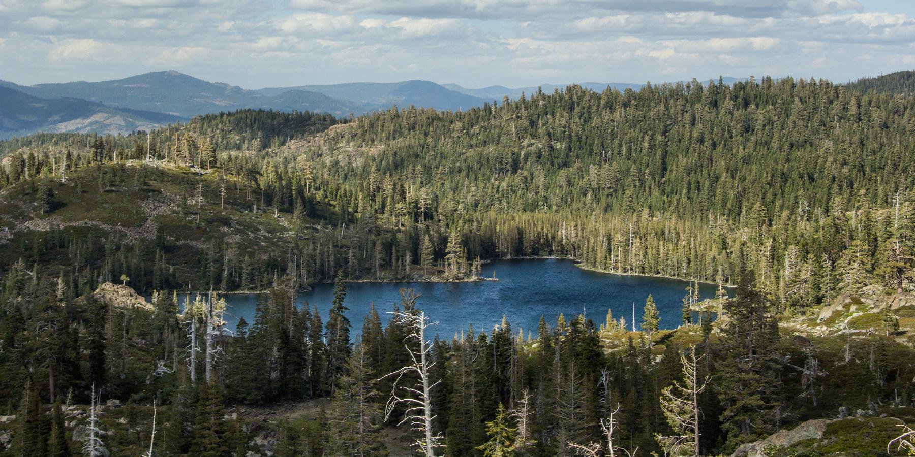 Big Bear Lake Dog Friendly Camping