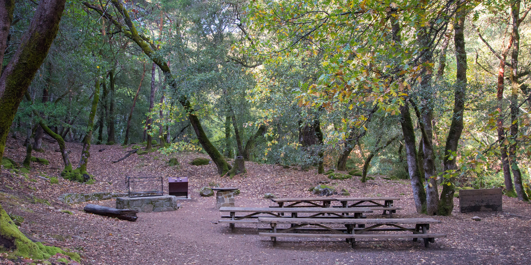 Uvas Canyon County Park | Outdoor Project