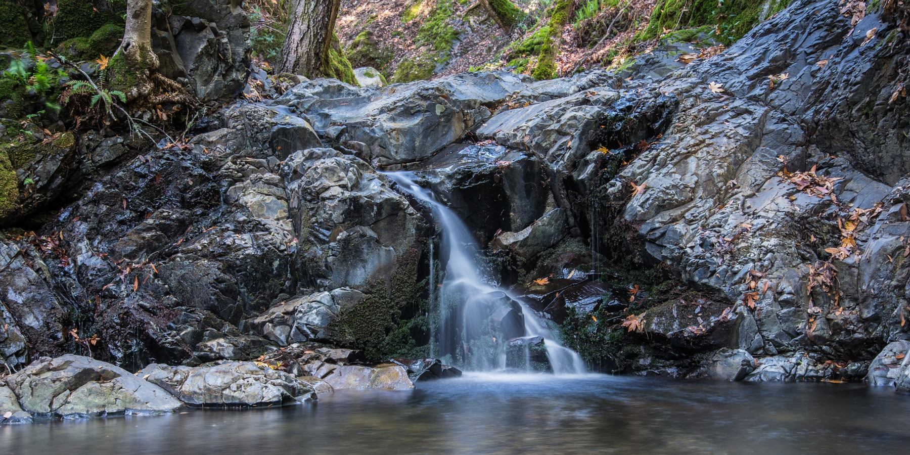 Uvas Canyon County Park Outdoor Project