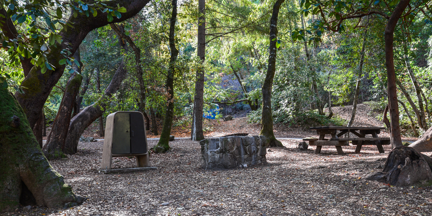 Uvas Canyon County Park Campground Outdoor Project