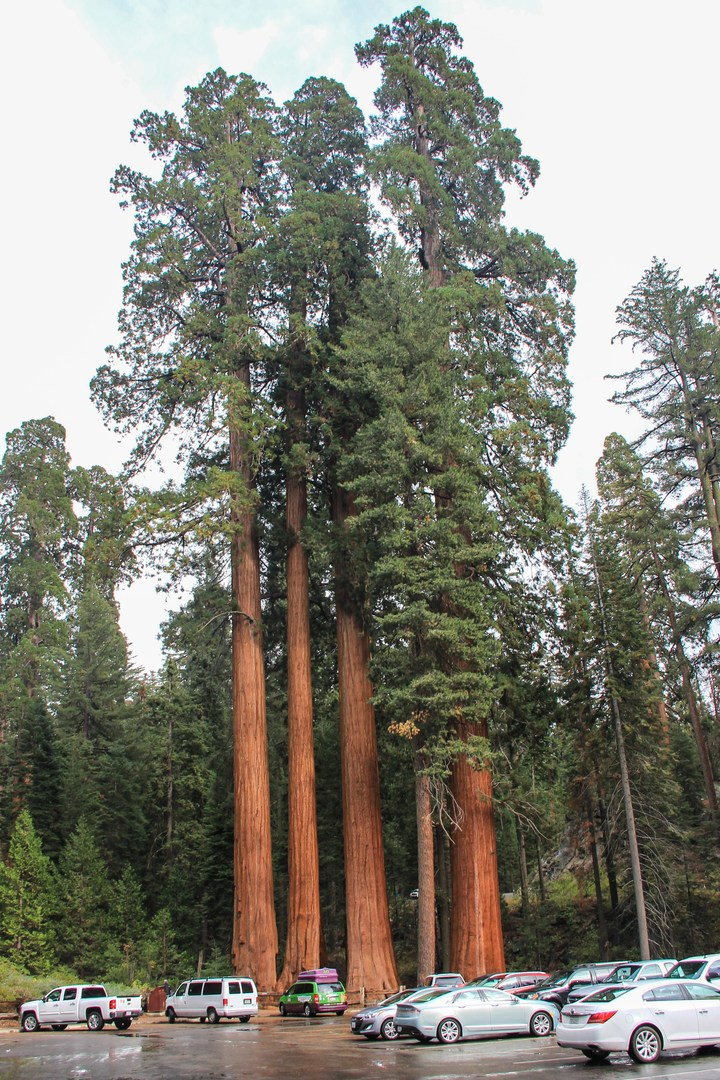Cars Near Me >> Grant Grove + General Grant Tree | Outdoor Project