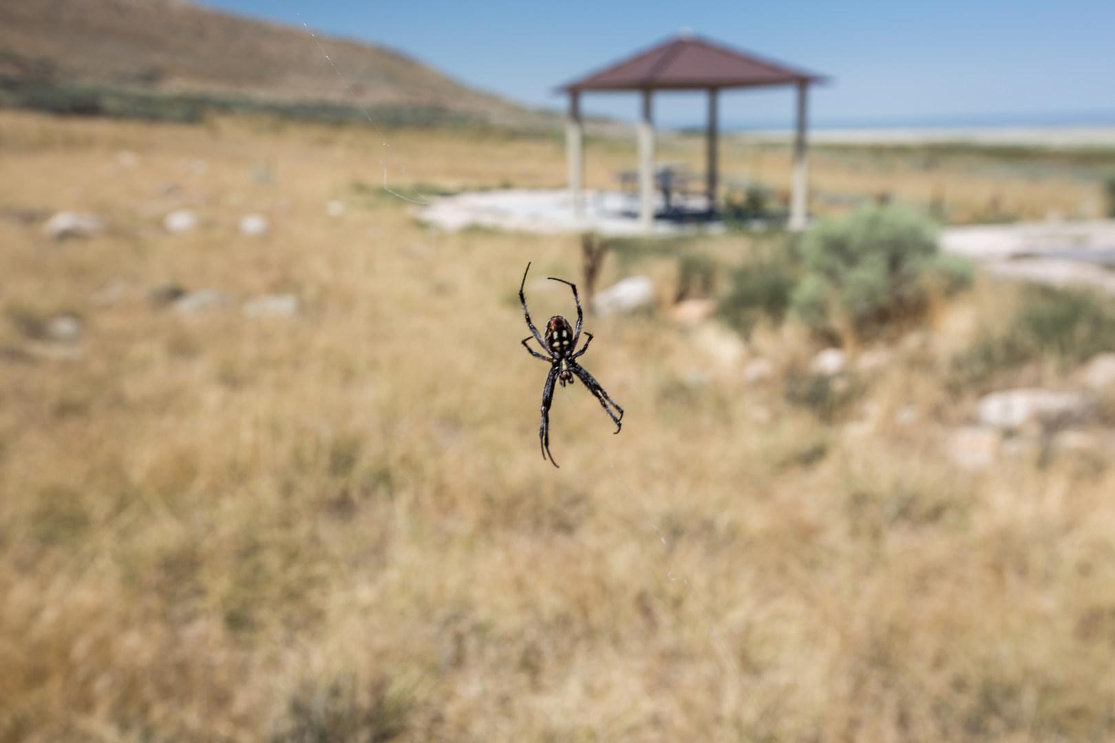 Salt Spring Island Spiders