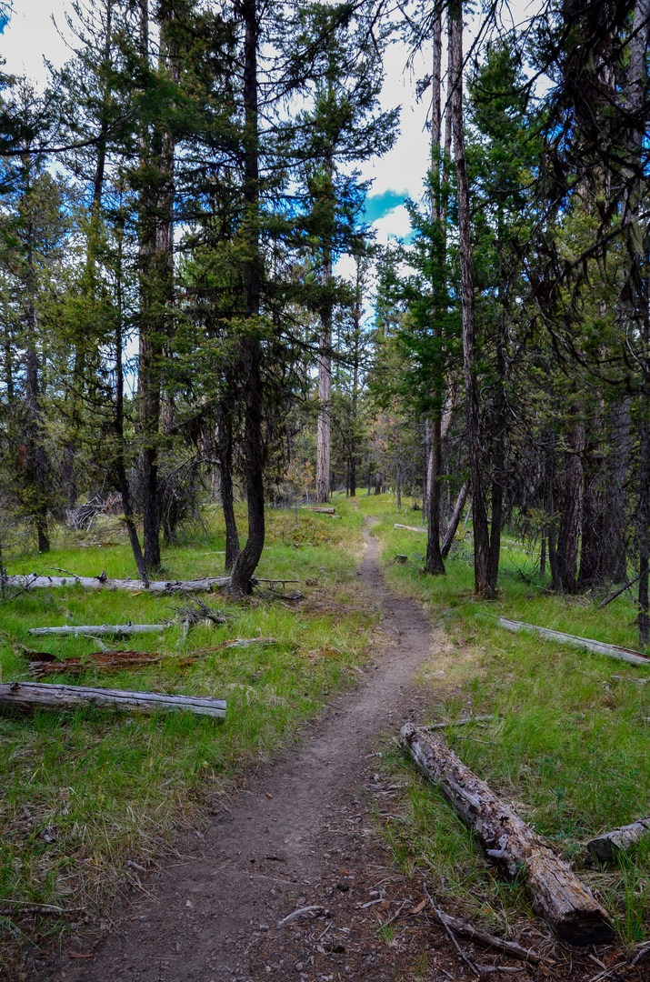 Pacific Northwest National Scenic Trail Section 8 ...