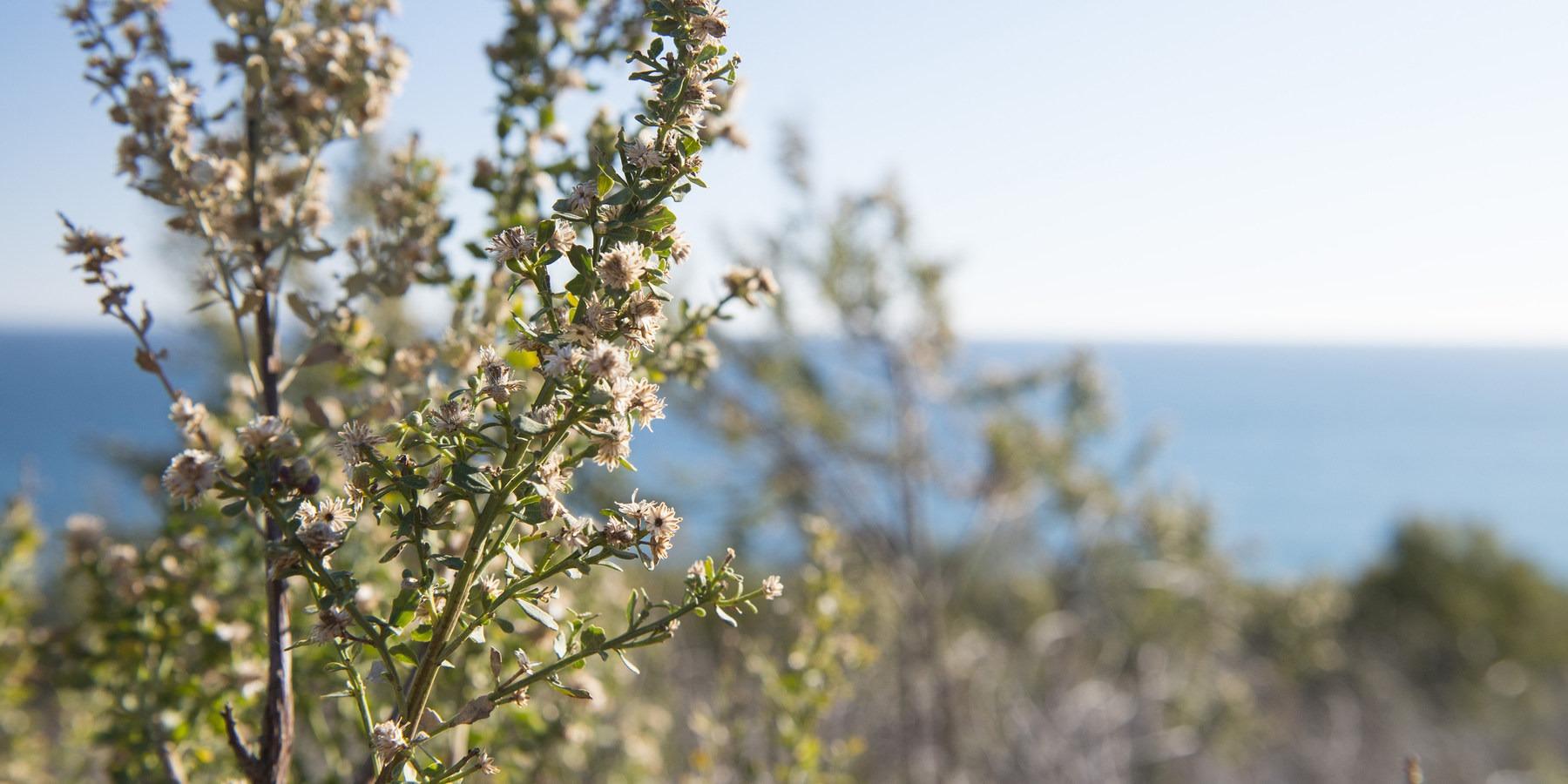 Malibu Bluffs Park Outdoor Project