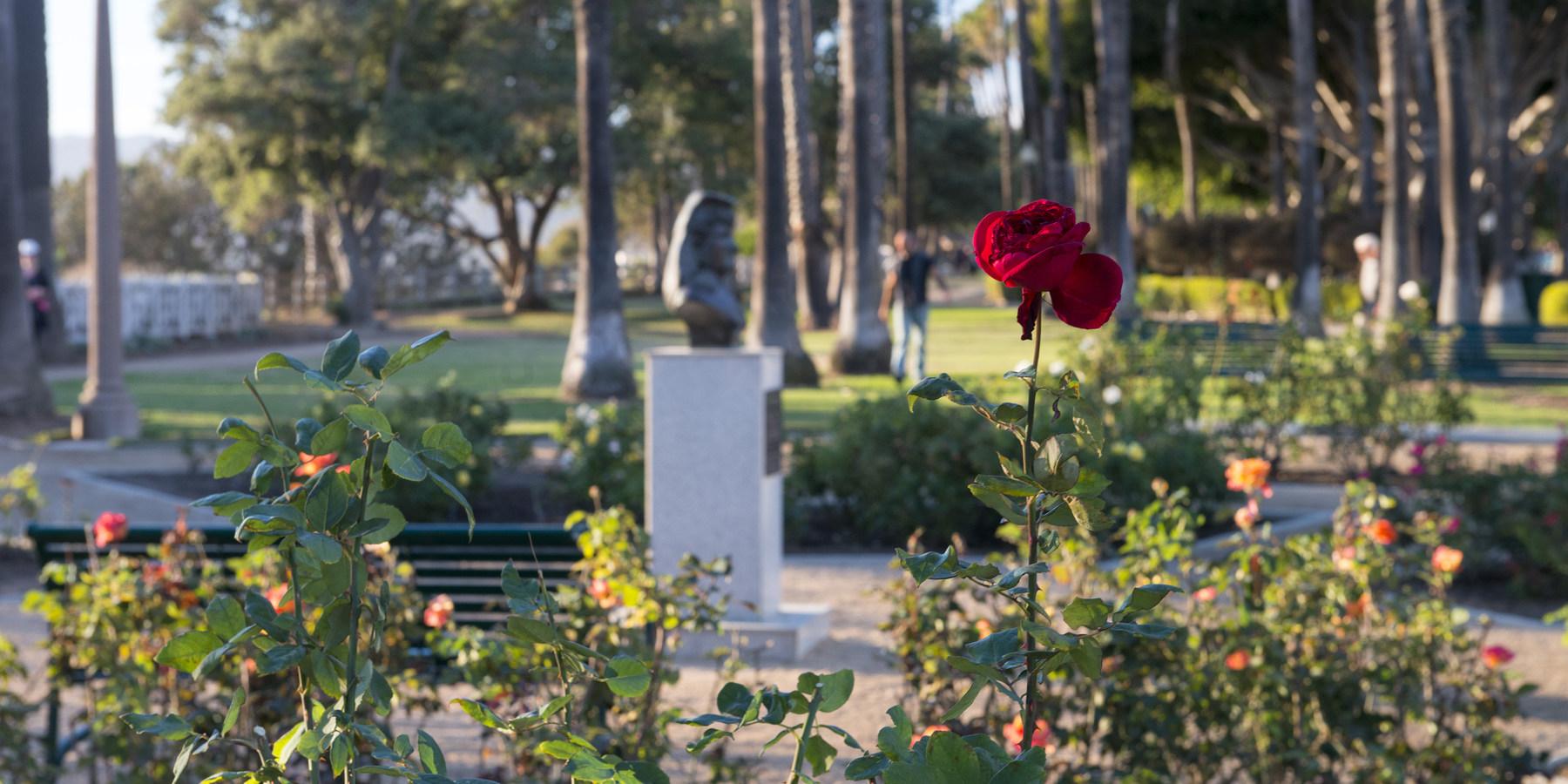 ... Rose Garden At Palisades Park, Santa Monica.  Palisades Park, Santa  Monica ...