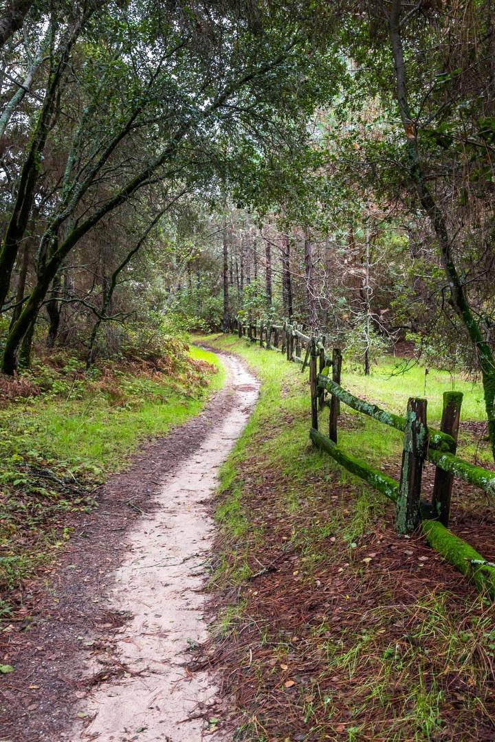 Dog Friendly Hikes Near Santa Cruz Ca
