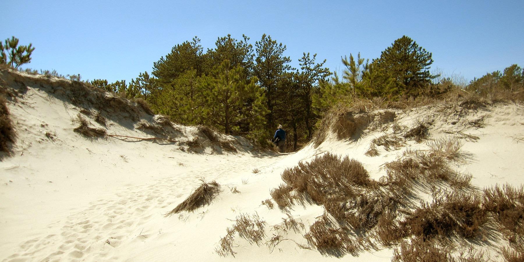 Crane Beach Wildlife Refuge Green Trail Dunes