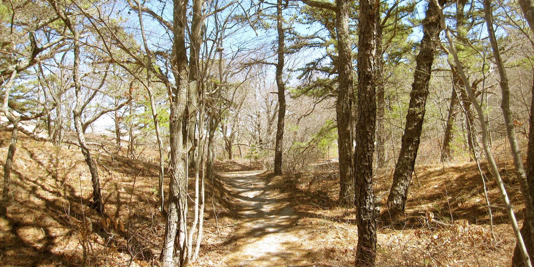 Green Trail Pine Forest Crane Beach Wildlife Refuge