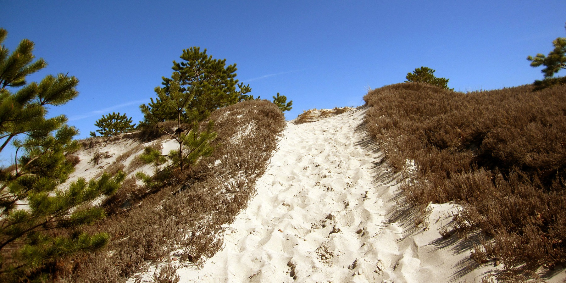 Steep Dunes Along The Red Trail Crane Beach Wildlife Refuge