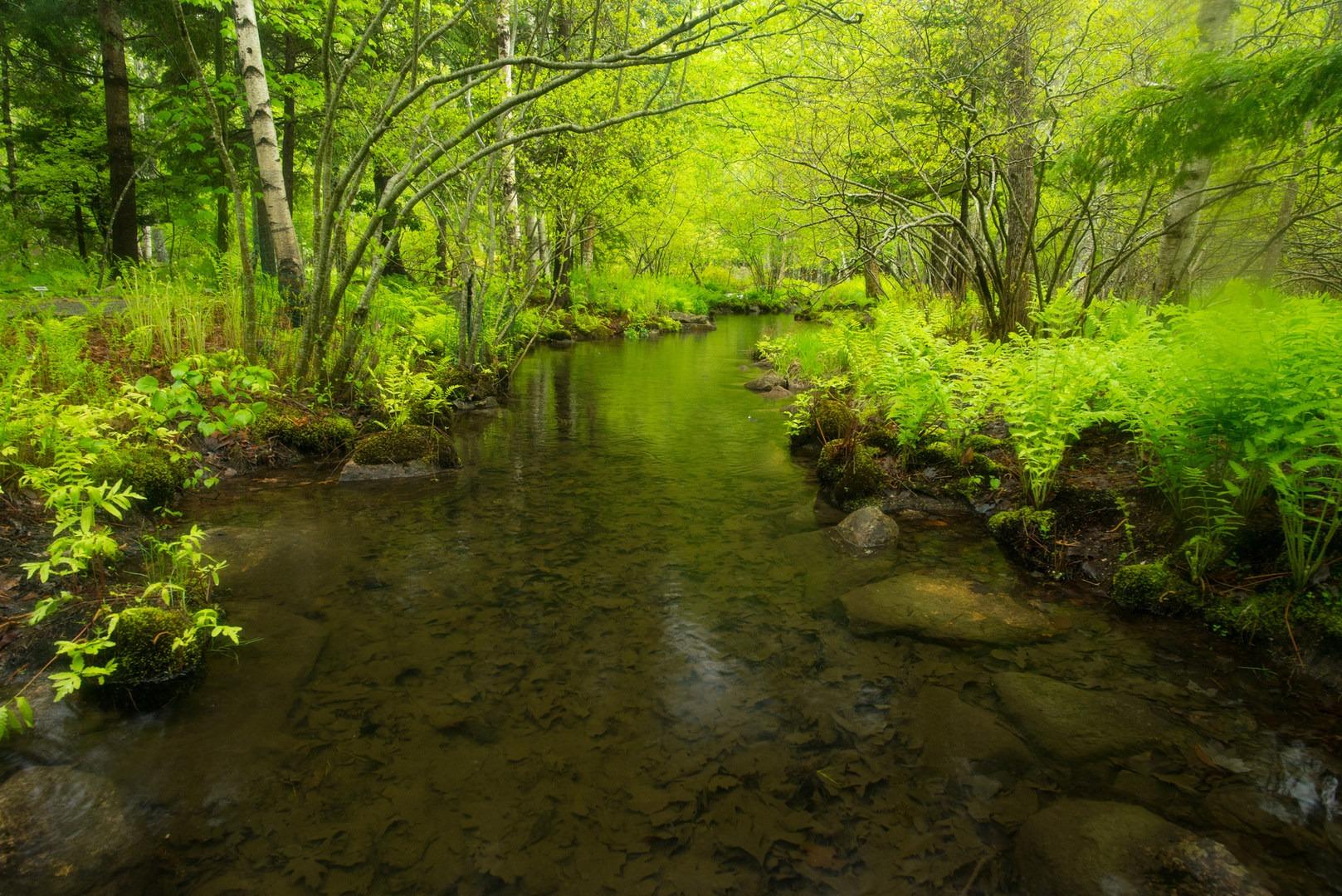 ... A Small Stream Flows Through The Wild Gardens.  Sieur De Monts Nature  Center + ...
