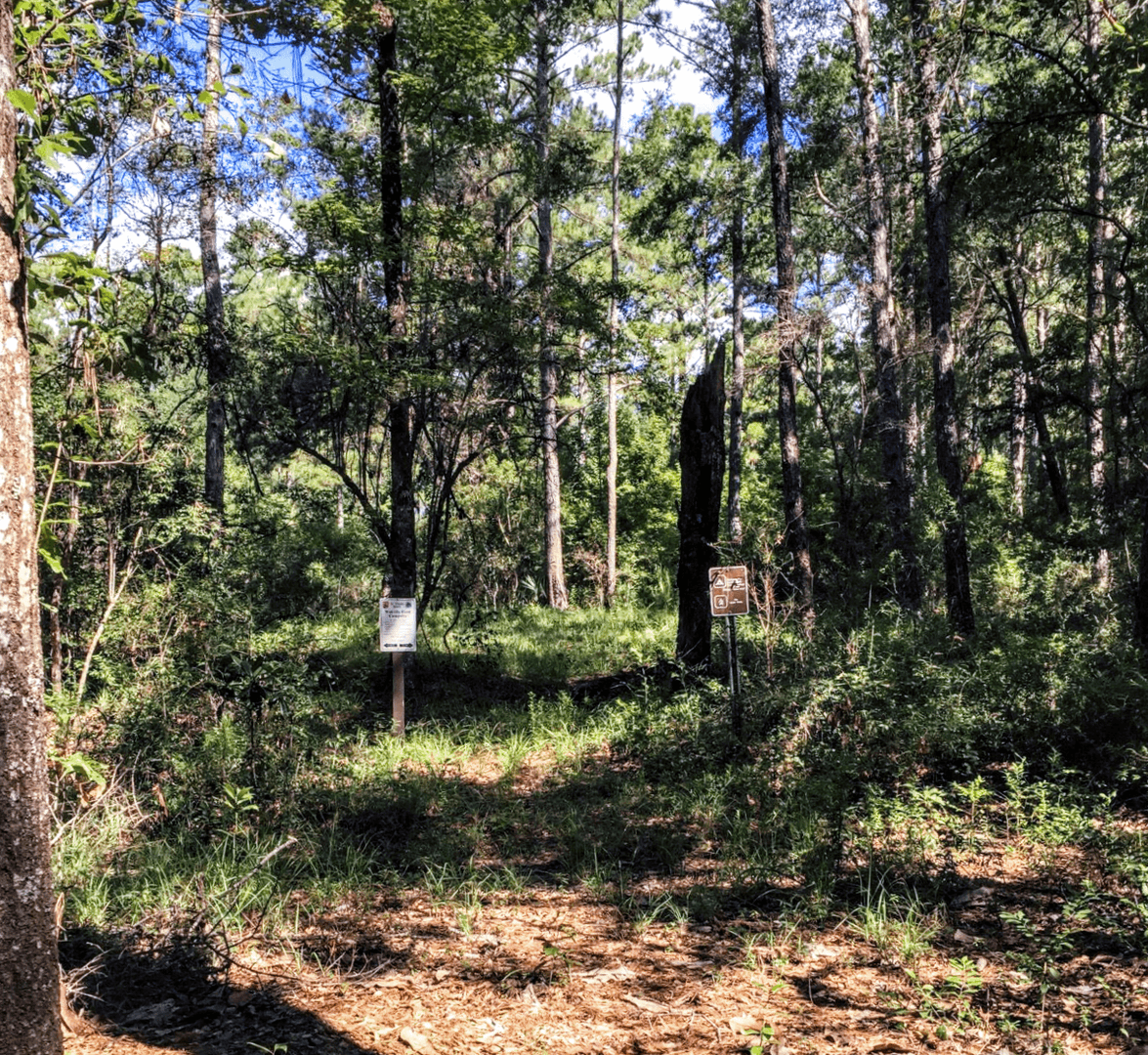 Fort Ann Primitive Camping: Cathedral Of Palms Trail