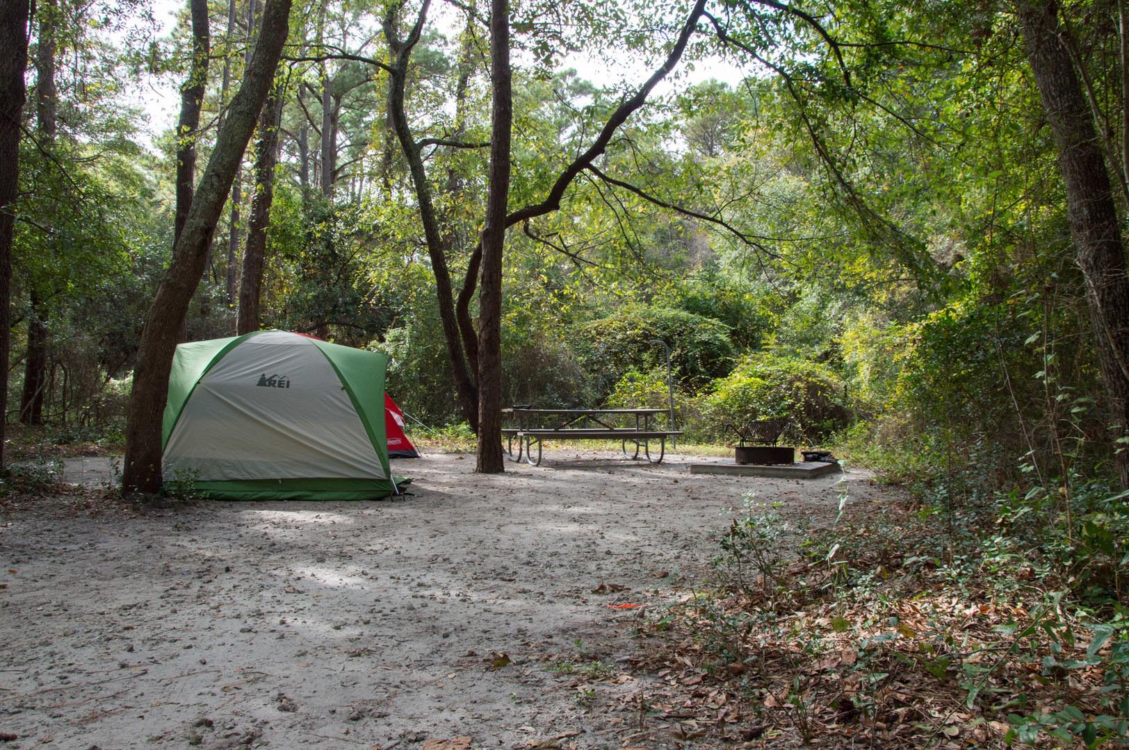 Carolina Beach State Park Campground Tent Camping At