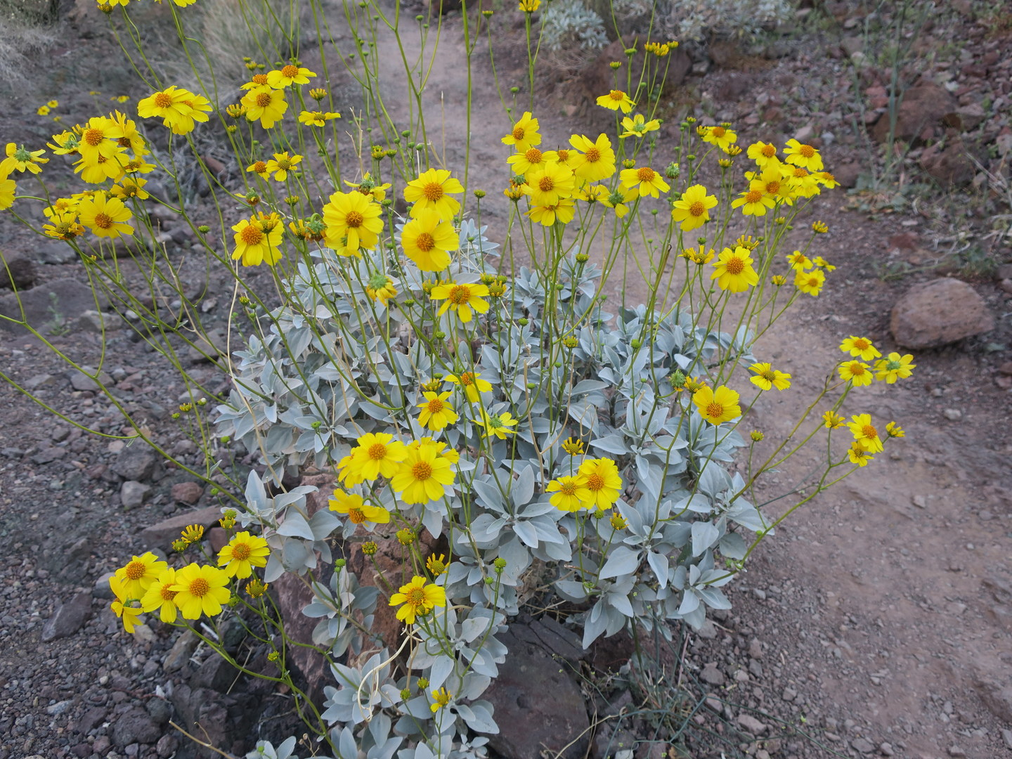 Arizona Hot Springs White Canyon Loop Hike Outdoor Project