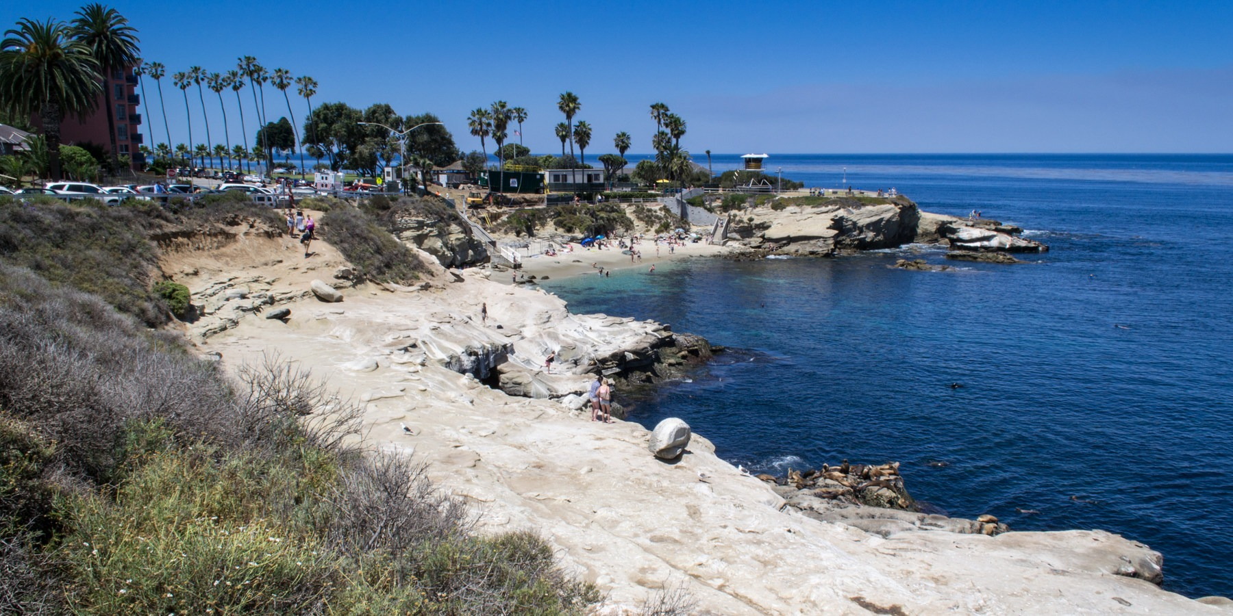 9 of the west coasts best tide pools outdoor project 9 of the west coasts best tide la jolla cove with scripps park in the background 9 of the west coasts nvjuhfo Gallery