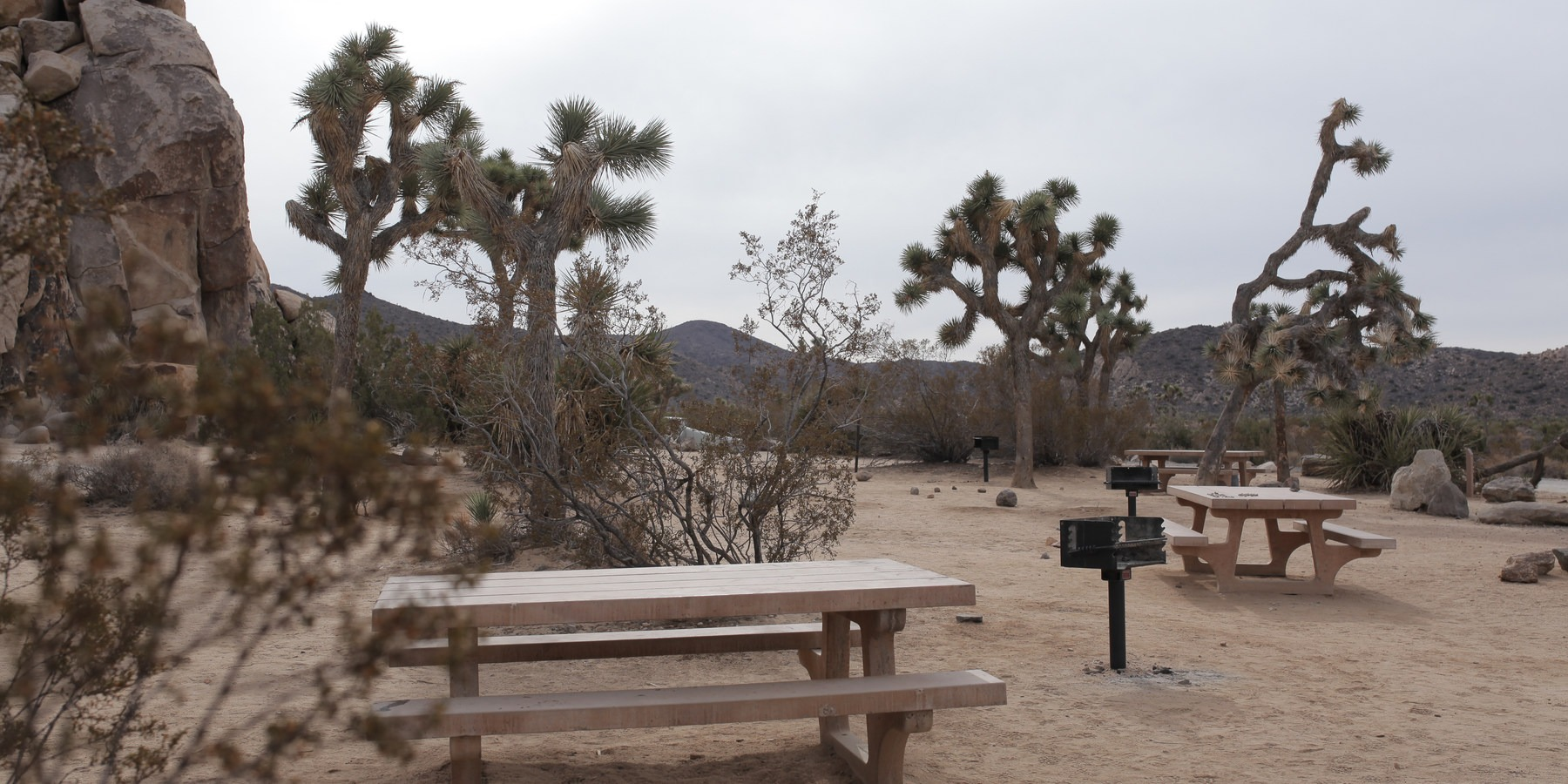 ... Typical Sites At Ryan Campground, Joshua Tree National Park.  Guide To  Camping In ...