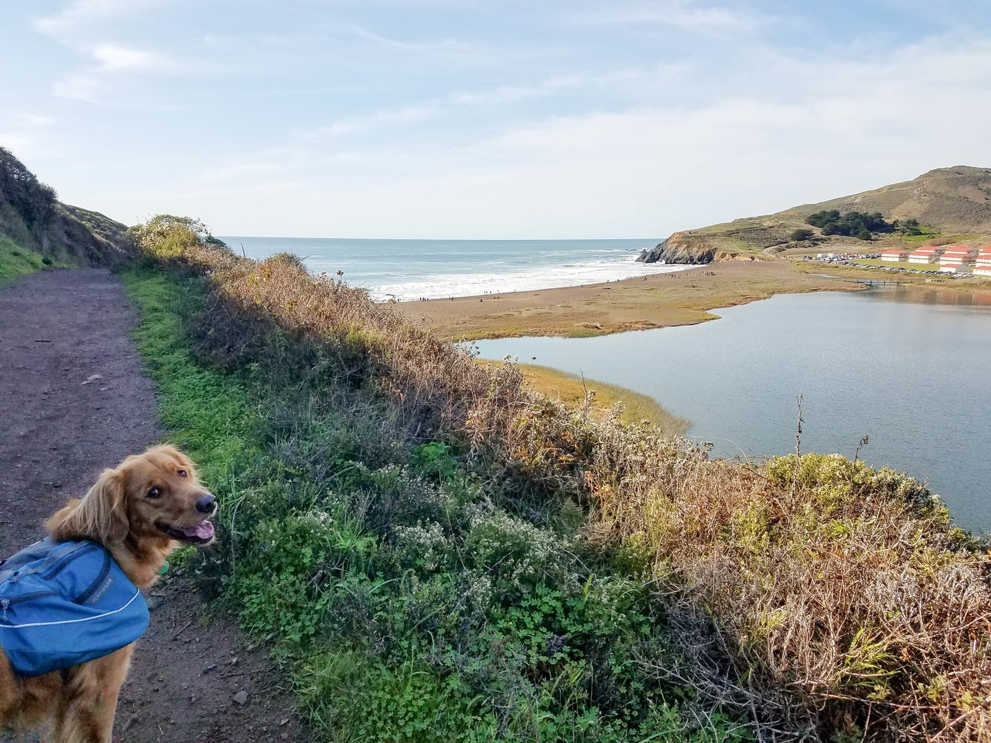 15 of California's Best Dog- · The view as you approach Rodeo Beach along  the Fort Cronkhite Loop Trail.