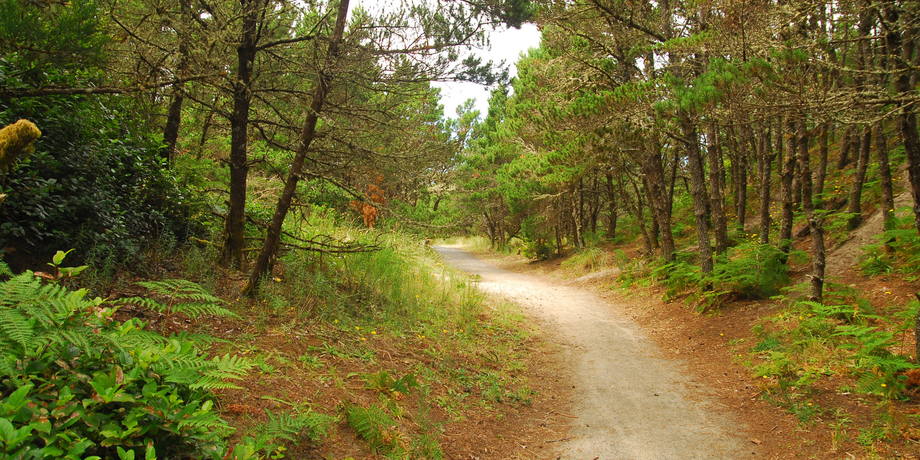 Trail From The South Beach State Park Campground To