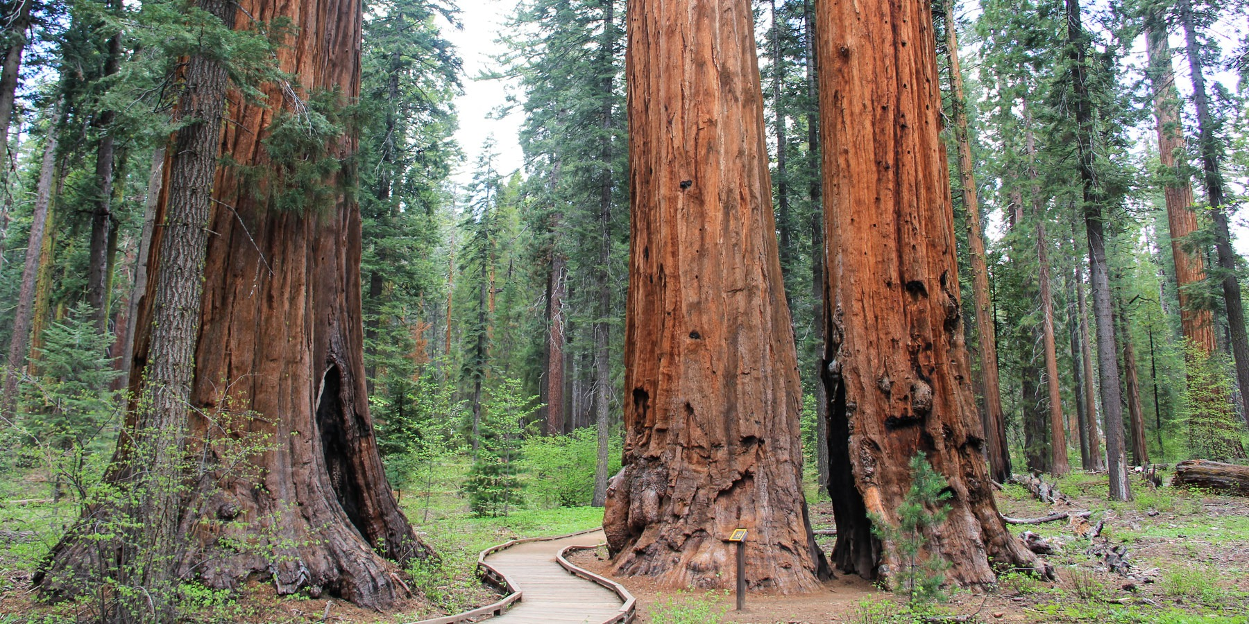 Redwood National And State Parks Dogs Allowed