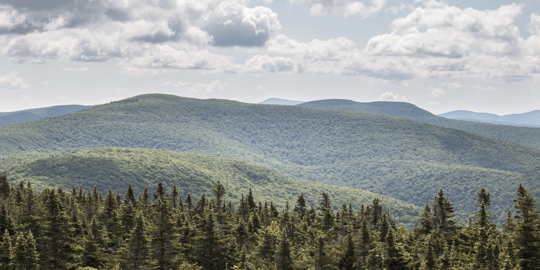 The Surrounding Catskill Mountains From Balsam Lake Fire Tower 8 Best Hikes In