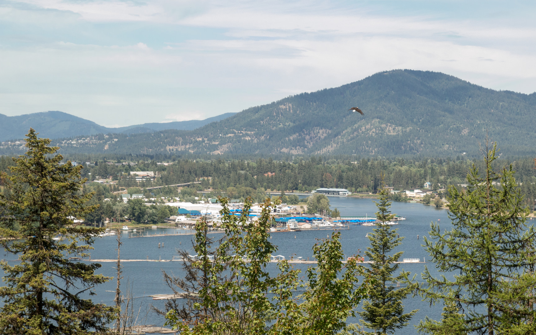 eagle bay cougars personals Search all montana real estate for sale on one easy-to-use site including homes, condos, townhomes, land, and foreclosure properties for sale.