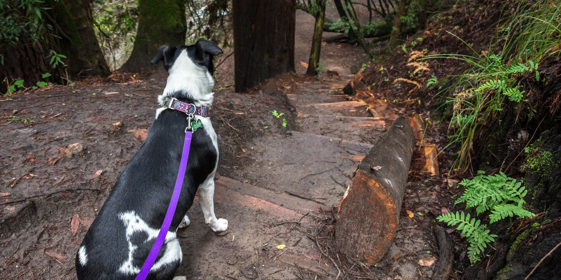 The Branceforte Creek Trail is a dog friendly hike.- 15 of California's  Best Dog ...