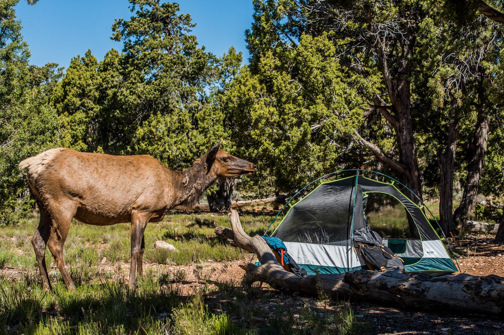 full hookup camping grand canyon