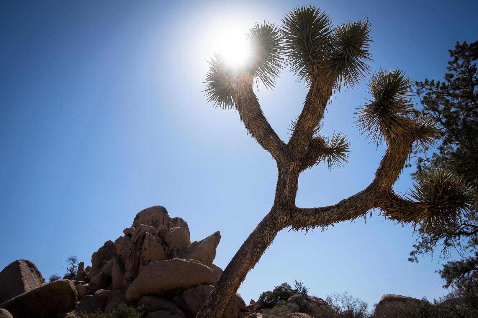 joshua tree national park chat sites Joshua tree national park california live webcams & weather.