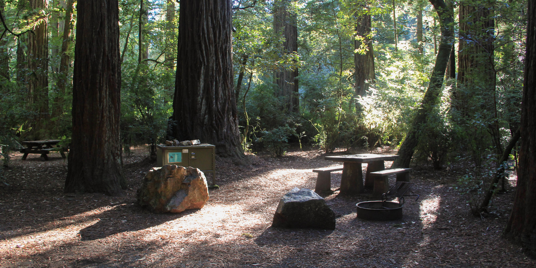 Typical campsite beneath the redwoods (Sequoia sempervirens) in Jedediah  Smith Campground.