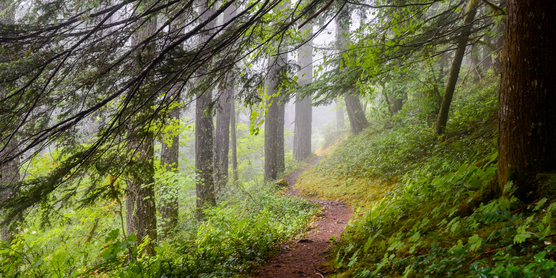 25 photos that will make you want to hike the pacific northwest
