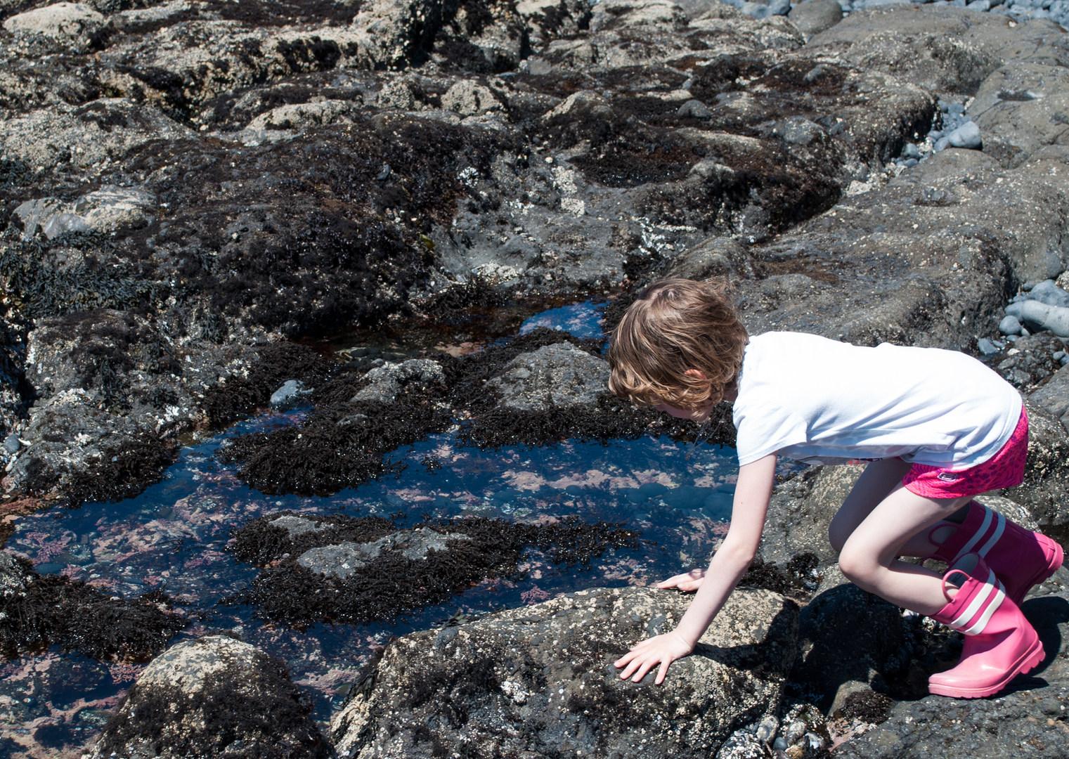 exploring oregon coast tide pools