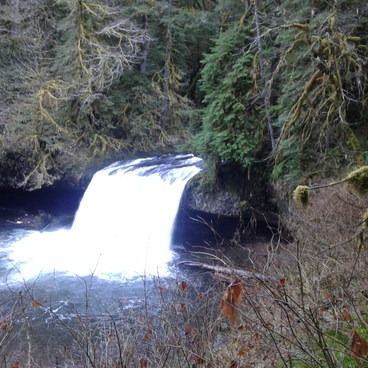 Butte Creek Falls Hike