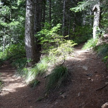 Here, go right up the hill, the sign for Zigzag Mountain Trail is on the tree, up the trail in this picture.- Burnt Lake + Zigzag Mountain