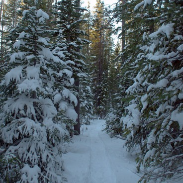 Snowshoe tracks in the Deschutes National Forest.- Swampy Lakes, Porcupine Snowshoe Loop