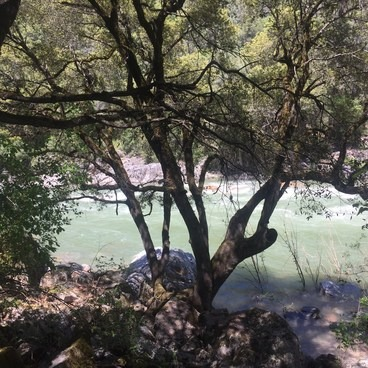 This hike give you so many opportunites to apprciate how full the river is. You can hear it rushing the entire hike.- South Yuba River Trail