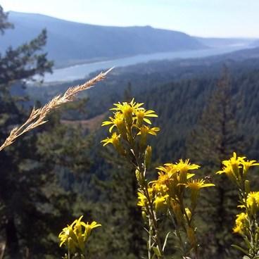 The Columbia River!- Little Hamilton Mountain Hike