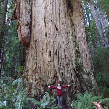 GoT- Jedediah Smith Redwoods State Park